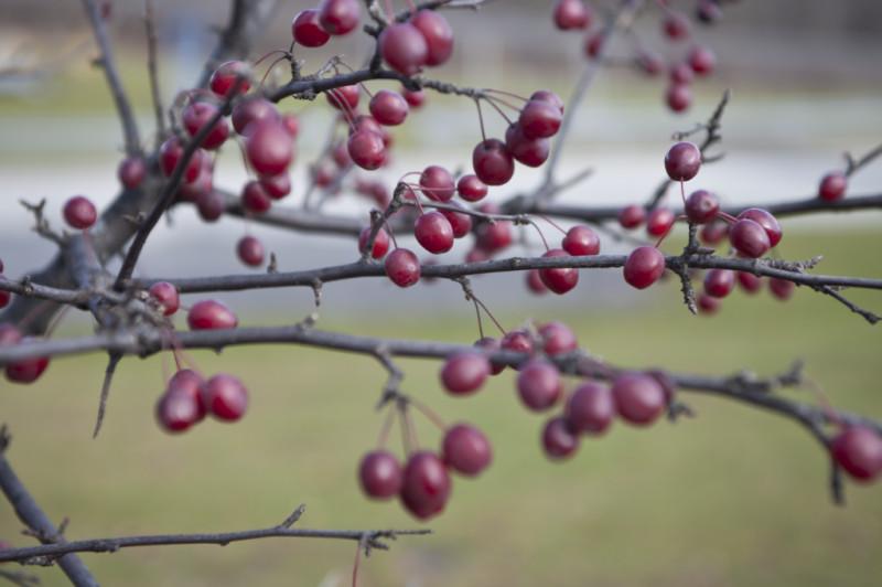pelbagai-bidang-buah