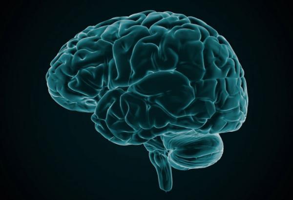 otak-kita